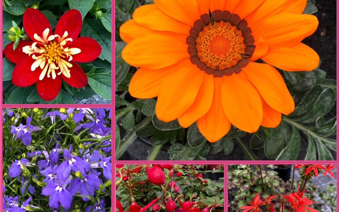 "Sommeraktion im Blumenhaus ""Nimm 3, zahl 2"""